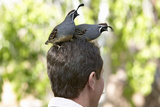 Two Quail Sitting on Head of a Male in Arizona-Sonora Desert Museum in Tucson, AZ Photographic Print