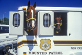 Mounted Patrol Horse in Trailer, Wilmington, De Photographic Print