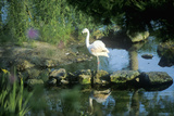 Flamingo in Bellingrath Gardens, Al Photographic Print