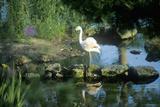 Flamingo in Bellingrath Gardens, Al Photographic Print