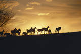 These are Horses Running in the Distance at Sunset Photographic Print