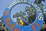 Sunken Gardens, Florida's Foremost Botanical Gardens, St. Petersburg, Florida Stampa fotografica