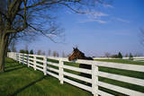 Horse Farm Where They Breed and Train Thoroughbred Race Horses. it Is Called the Donamire Farm Photographic Print