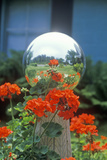 Geraniums and Garden Reflecting Ball, PA Photographic Print