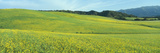 Spring Field, Mustard Seed, Near Lake Casitas, California Photographic Print