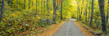 Autumn, Macedonia Brook State Park, Connecticut Photographic Print