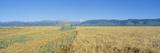 Grain Harvest, Grant Teton Mountains, Idaho Photographic Print