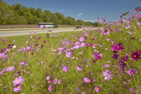 Pink and Purple Flowers Blooming Along Interstate Highway in Sc with Passing Vehicles Photographic Print