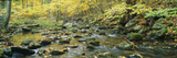 Macedonia Brook State Park, Connecticut Lámina fotográfica
