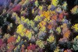 Aerial View of Autumn Colors and Trees in Mountains of VT Photographic Print