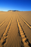 Off Road Vehicle Tracks at Coral Pink Sand Dunes State Reserve in Southern Ut Photographic Print