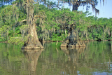 Cypress Trees in the Bayou, Lake Fausse Pointe State Park, Louisiana Photographic Print