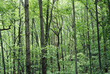 Forest in Blue Ridge Mountains, Va in Full Foliage Photographic Print