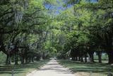 Spanish Moss Covered Oak Trees Lining a Plantation Road, Sc Photographic Print