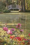 Magnolia Plantation Garden of the Old South, Charleston, Sc Fotografie-Druck