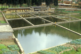 Aquaculture Fish Ponds in Kunming, People's Republic of China Photographic Print