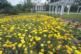 Home and Gardens of the Boone Hall Plantation, Charleston, Sc Photographic Print