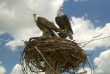 Two Fake Eagles and a Nest on the Roadside in Rural Virginia Photographic Print