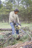 Native American Cutting Wood with Chain Saw, Jemez Mountains, NM Photographic Print