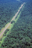 Aerial View of Road Running Through Rainforest, Argentina and Brazil Photographic Print