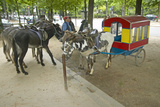 Donkeys Waiting to Be Ridden at Donkey Ride in Park, Paris, France Stampa fotografica