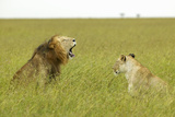 Male and Female Lion in Grasslands of Masai Mara Near Little Governor's Camp in Kenya, Africa Photographic Print