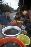 Eels for Sale at Bei Marketplace in Dali, Yunnan Province, People's Republic of China Fotografie-Druck