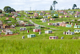 A Village of Brightly Colored Mandela Houses in Zulu Village, Zululand, South Africa Photographic Print