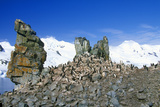 Chinstrap Penguins (Pygoscelis Antarctica) on Half Moon Island, Bransfield Strait, Antarctica Photographic Print