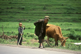 Farmer with Son and Cow in Kunming, Yunnan Province, People's Republic of China Photographic Print
