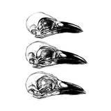 Crow Skull Affiches par  13UG13th