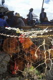Chickens for Sale at Bei Marketplace in Dali, Yunnan Province, People's Republic of China Photographic Print