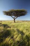 Mount Kenya and Lone Acacia Tree at Lewa Conservancy, Kenya, Africa Photographic Print