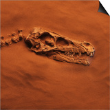 Velociraptor Skull and Neck in Sand Posters by Louie Psihoyos