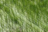 Rice Paddies in Dali, Yunnan Province, People's Republic of China Photographic Print