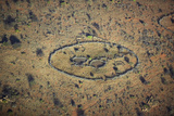 Aerial View of Masai Village in Nature's Circle and Goat Herds Near Lewa Conservancy, Kenya, Africa Photographic Print