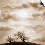 Trees and Cloudy Sky Prints by  JoSon