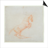 A Prancing Horse, Facing Right, 1790 (Red Chalk on Paper) Prints by George Stubbs