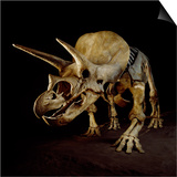 Triceratops Skeleton Prints by Louie Psihoyos