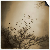 Birds and Trees, Discovery Park Prints by Kevin Cruff