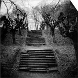 Run-Down Stairway Among Leafless Cherry Trees Prints by Annette Fournet