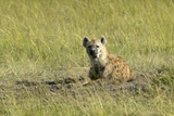 Spotted Hyena in Grasslands of Masai Mara Near Little Governor's Camp in Kenya, Africa Photographic Print