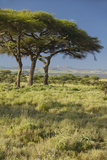 Mount Kenya and Acacia Trees at Lewa Conservancy, Kenya, Africa Photographic Print