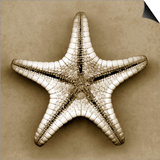 Sugar Starfish Bottom Print by John Kuss