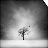 Solitary tree in a winter landscape Posters by George Disario