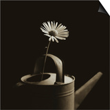 Single Daisy in Antique Watering Can Print by Tom Marks