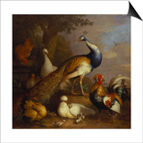 A Peacock, a Peahen and Poultry in a Landscape Prints by Tobias Stranover