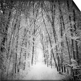 Forest in winter Prints by George Disario
