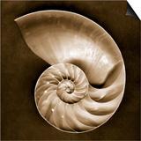Half Nautilus Prints by John Kuss
