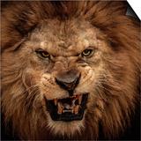 Close-Up Shot Of Roaring Lion Poster von NejroN Photo